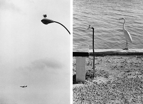 photography, black and white, magnum photo